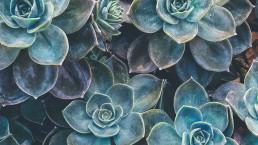 Avoka Health Dr Giselle Withers tugun gold coast kirra northern nsw tweed heads succulents