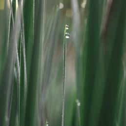 Avoka Health Dr Giselle Withers tugun gold coast kirra northern nsw tweed heads depression grass dew