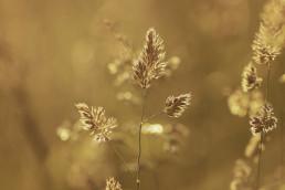 Avoka Health Dr Giselle Withers tugun gold coast kirra northern nsw tweed heads golden grass